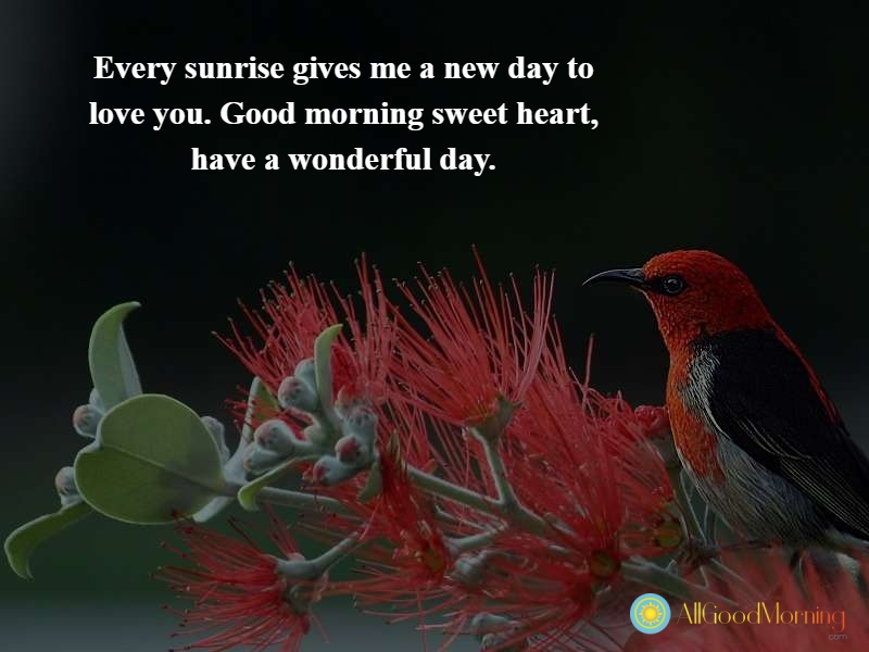 good morning quotes for him english