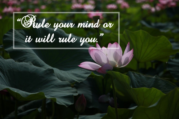 buddha quotes law of attraction