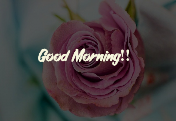 good morning rose for my wife